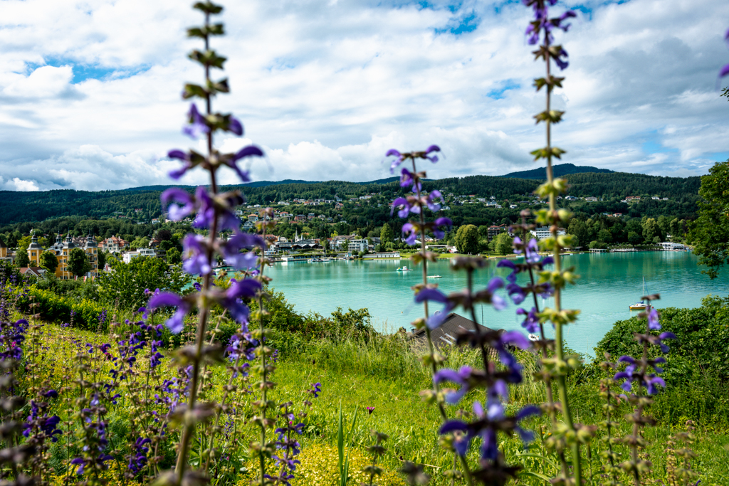lake Wörth with purple flowers in front.
